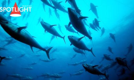 ทูน่าตัวละ 100 ล้าน! เปิดศักราชตลาดปลาแห่งใหม่ในโตเกียว
